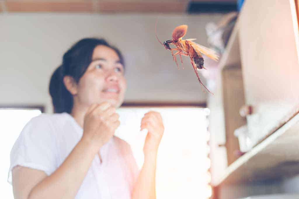 Are Flying Cockroaches Actually Dangerous?