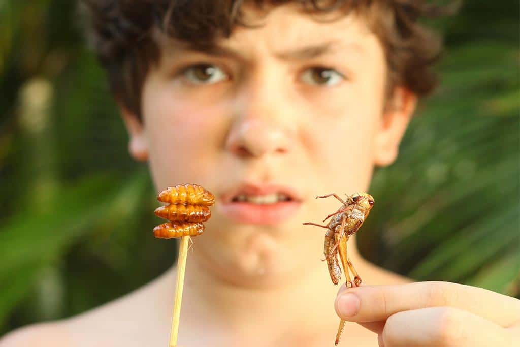 Why Do Humans Find Insects So Incredibly Disgusting?