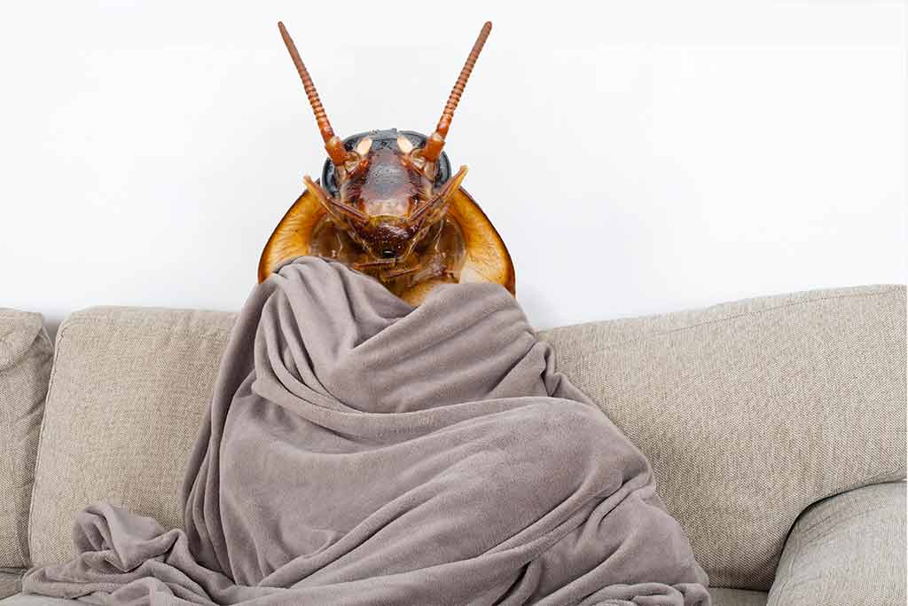 Cockroach Staying Warm In The Winter
