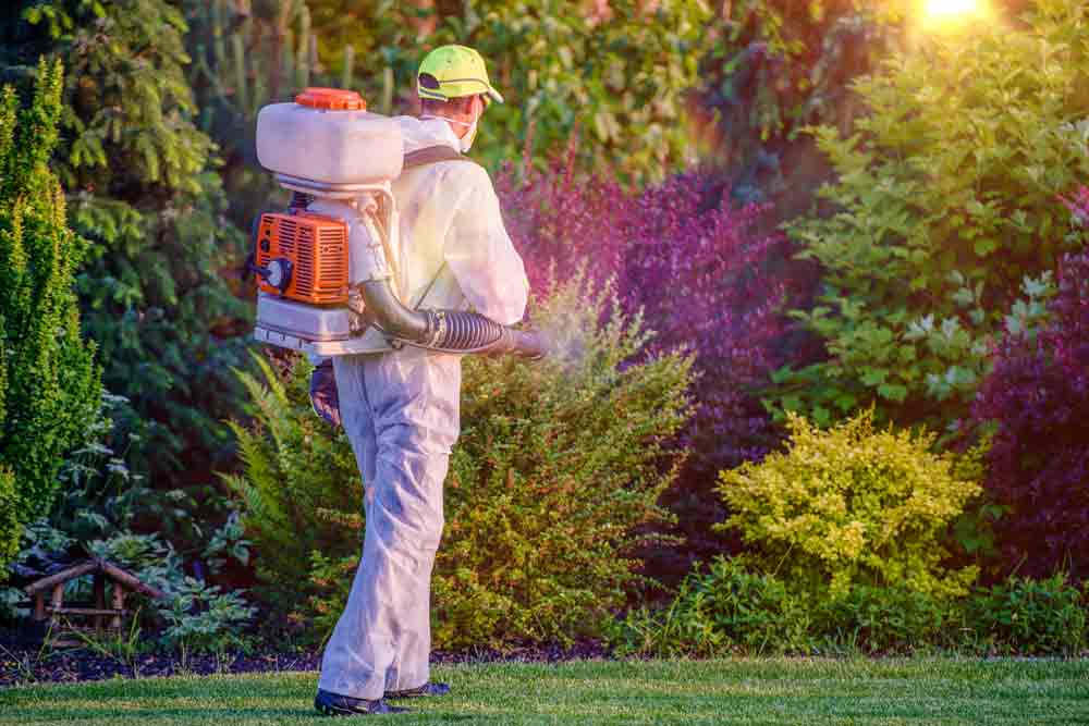 Calling Pest Control To Deal With Wasps
