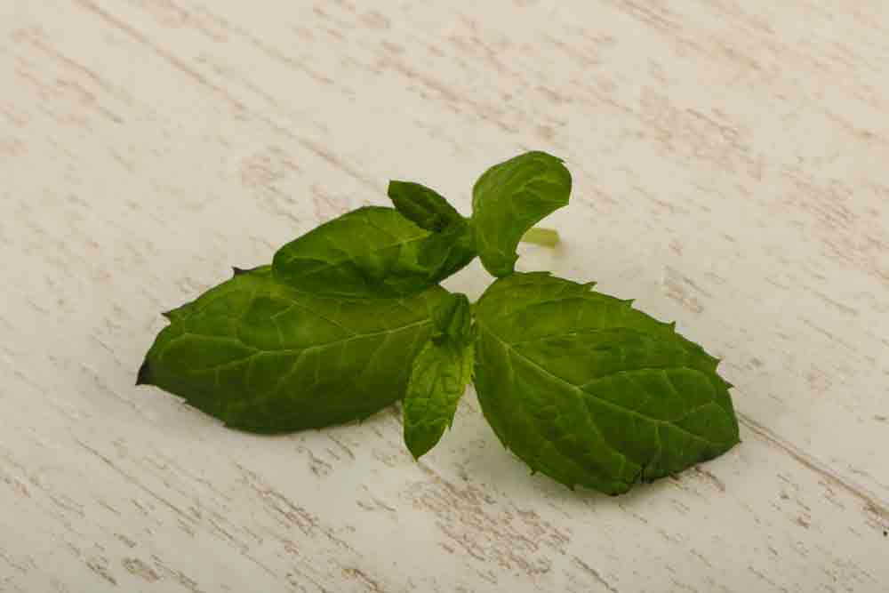 Peppermint leaves to help keep wasps away