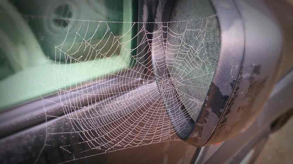 Spider Web On Car Next To Crevice In Car Mirror